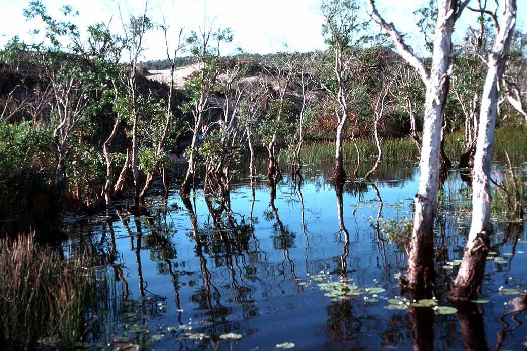 Elcho Island: Billabong, Elcho Island